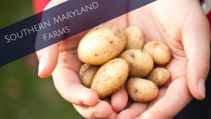 Southern Maryland Farms